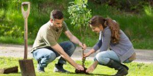 Kan je voortleven als boom of struik?